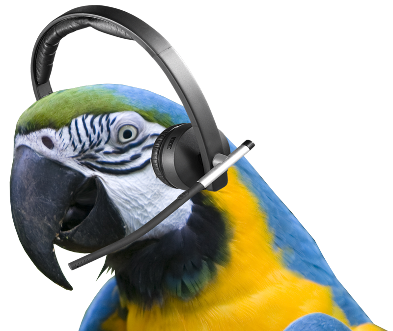 macaw me later